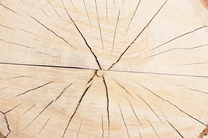 rdzeń kłody drewna