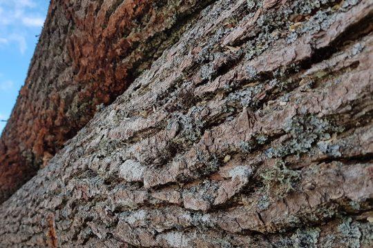 wady surowca drzewnego